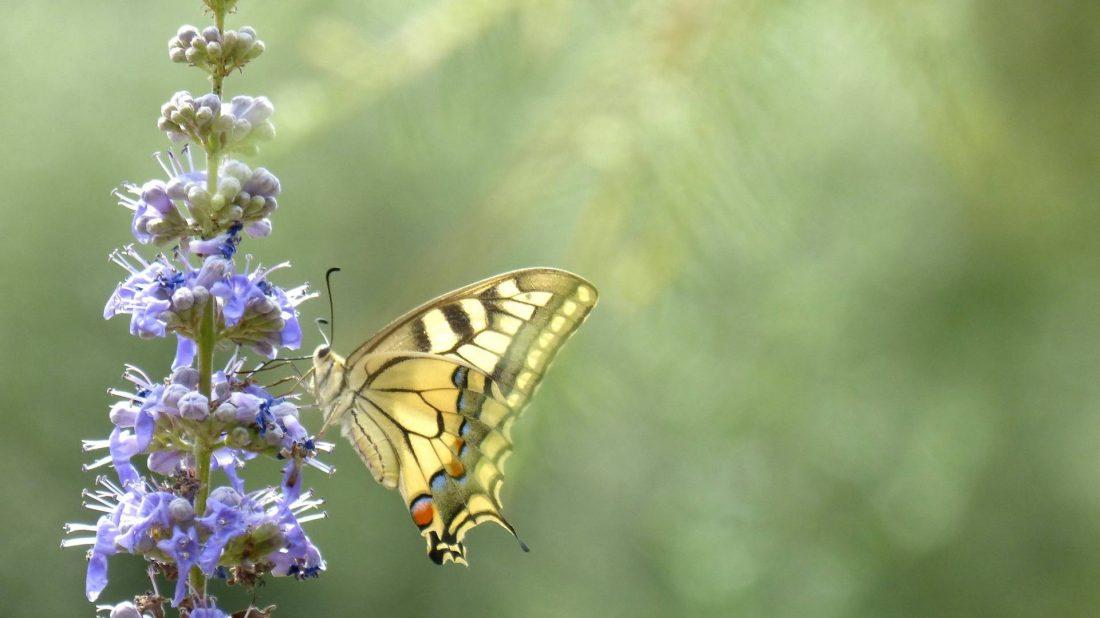 Butterfly-18