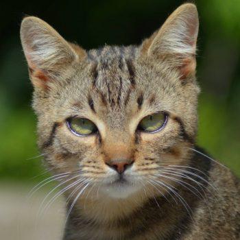 Cat-16