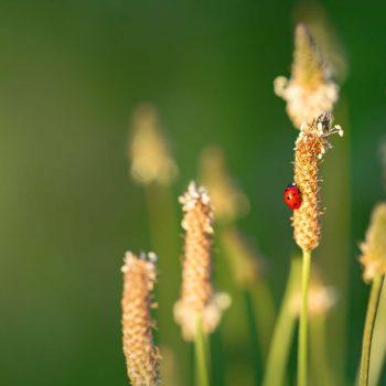 Ladybug-30