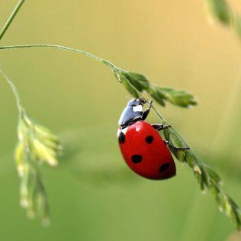 Ladybug-32