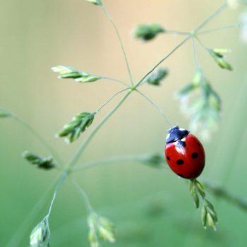 Ladybug-33