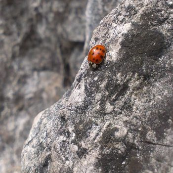 Ladybug-34