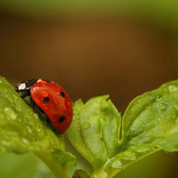 Ladybug-35