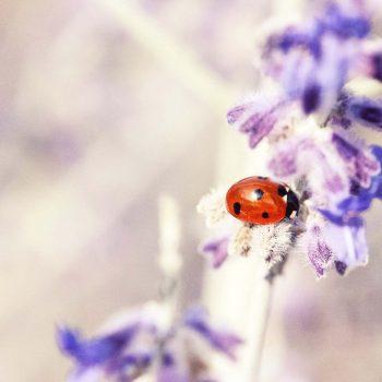 Ladybug-40