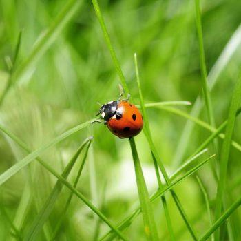 Ladybug-41
