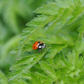 Ladybug-44