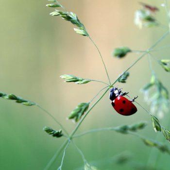 Ladybug-48