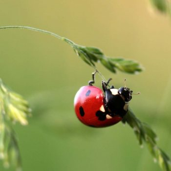 Ladybug-49