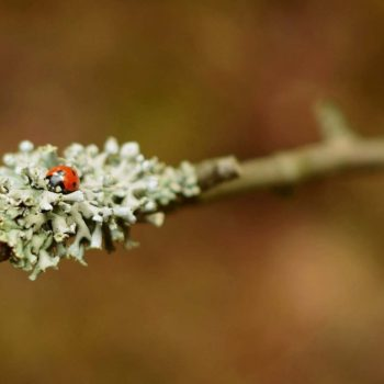 Ladybug-54